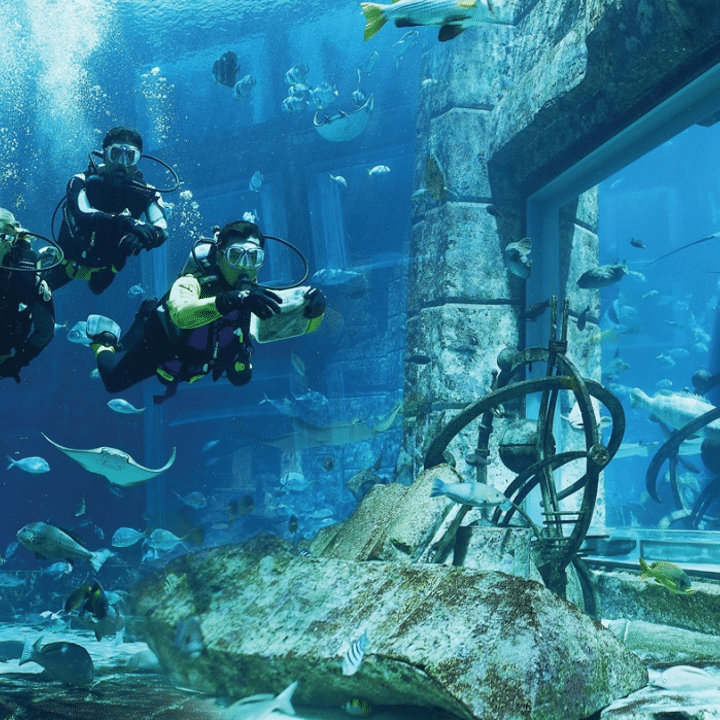 Dubai Aquarium & Underwater Zoo - Dubai Akvaryumu ve Sualtı Hayvanat Bahçesi - Rehberi ve Biletler