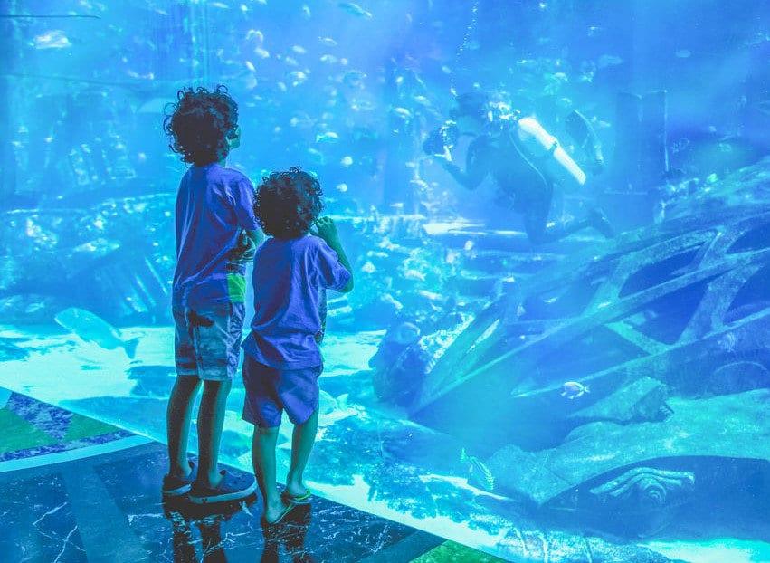 Dubai Akvaryumu içi