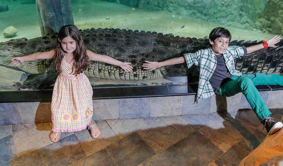 Dubai Akvaryumu'ndaki dev timsah