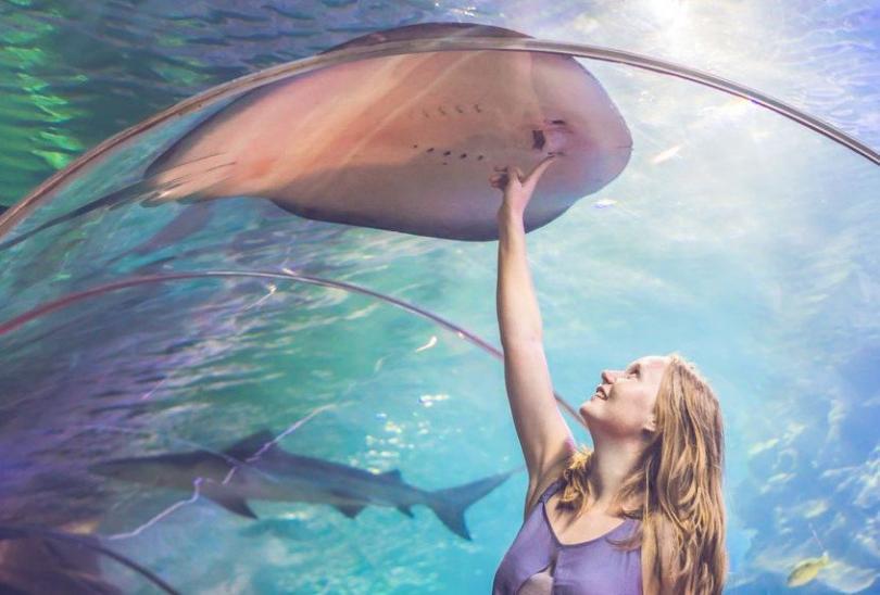 Dubai Aquarium & Underwater Zoo - Dubai Akvaryumu ve Sualtı Hayvanat Bahçesi - Rehberi ve Biletler (9)