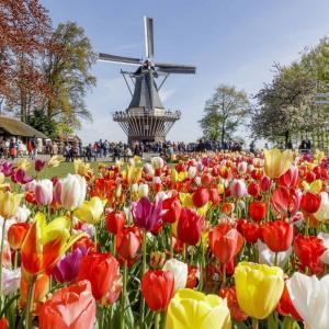 Hollanda Lisse Şehri Bilet ve Turları