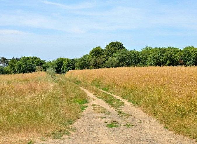 Van Gogh'un resmi yaptığı Auvers-sur-Oise buğday tarlası - Resmin Kaynağı