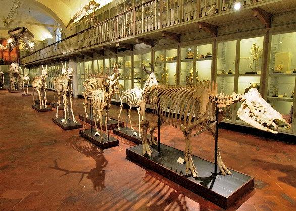 Floransa La Specola Doğa Tarihi Müzesi