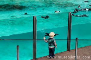 Londra Hayvanat Bahçesi Bileti ve Giriş Ücreti - Penguenler