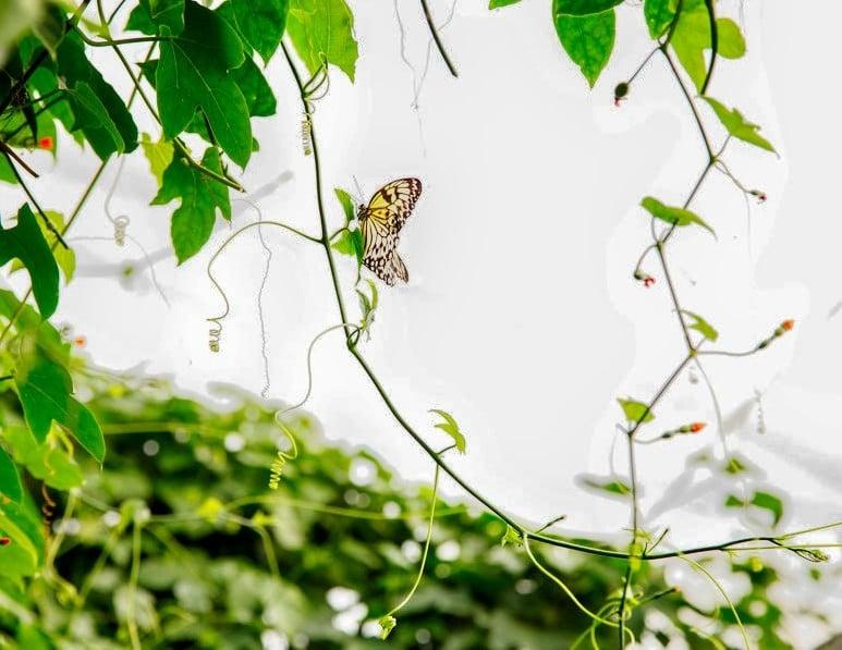 Londra Hayvanat Bahçesi - Kelebekler