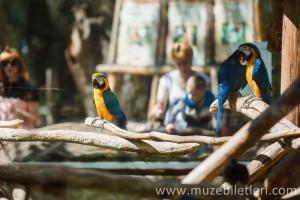 Londra Hayvanat Bahçesi - Papağanlar