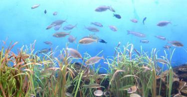 Akdeniz Akvaryumları Bölümü - Barselona Akvaryumu