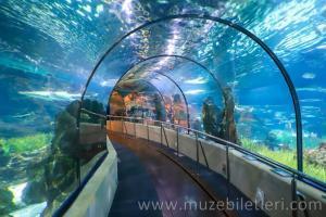 Barselona Akvaryumu - Bu tünelde yürürken kendinizi Akdeniz'in tabanında yürüyormuş gibi hissedeceksiniz.