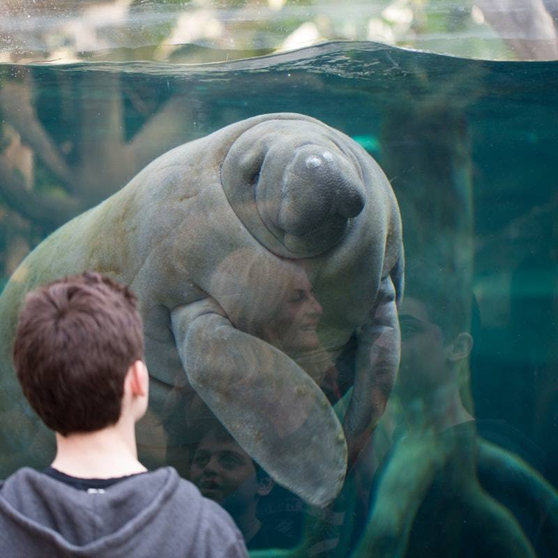 Paris Hayvanat Bahçesi