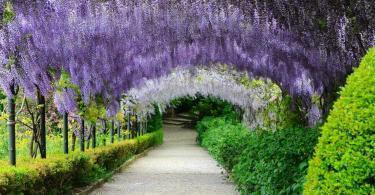 Boboli Bahçeleri - Floransa - İtalya (5)